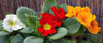 Домашние цветы и их названия